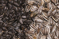 Black and striped Sunflower seeds, New Braunfels, Hill Country, Texas, USA