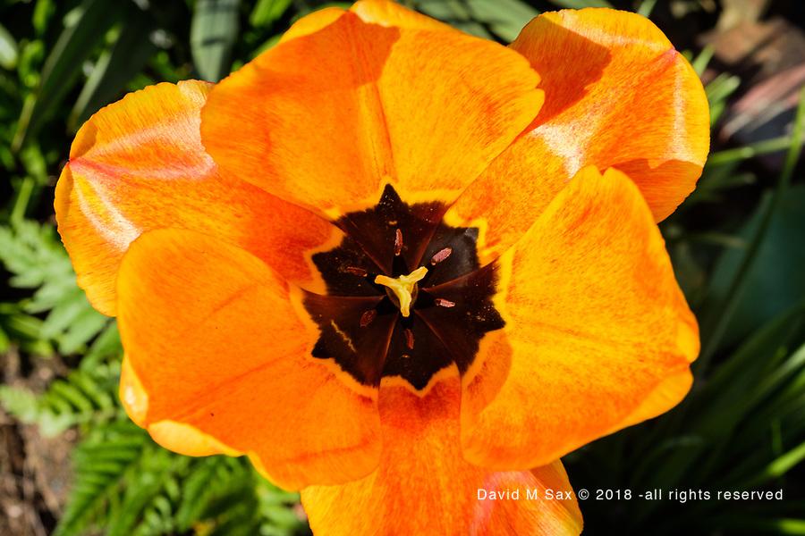 4.21.17 - Orange...