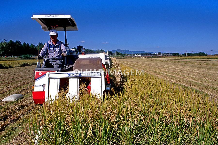 Colheita mecânizada de arroz na Coréia do Sul. 1999. Foto de Ricardo Azoury.