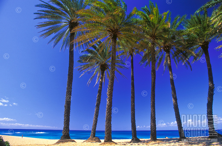 Sunset beach with palm trees on a blue sky sunny day