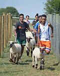 Mulugeta Kiflom (right) and Robel Haile (left), both 13-year old resettled refugees from Ethiopia, leads a group of youth learning how to show sheep and goats in Linville, Virginia, on July 17, 2017. The youth are preparing to show their animals in a county fair. <br /> <br /> They and other refugees were resettled in the Harrisonburg, Virginia, area by Church World Service. <br /> <br /> Photo by Paul Jeffrey for Church World Service.
