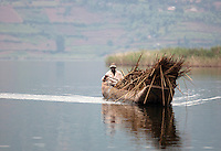 Man transporting reeds in Lake Bunyonyi, South West Uganda
