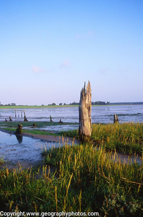 ATBK2A Mudflats and wetland environment estuary Blythburgh Suffolk England