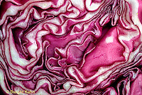HS37-010x  Cabbage - close-up of cut head - Lasso variety