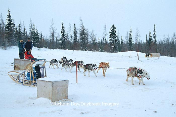 60595-00310 Sled Dog ride  Churchill, MB