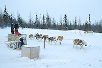 60595-00310 Sled Dog ride  Churchill, MB
