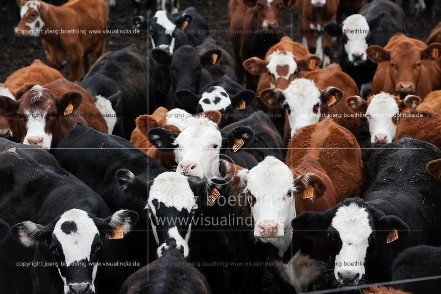 URUGUAY , Treinta y Tres, cattle breeding for meat export / Rinderzucht fuer Fleischexport
