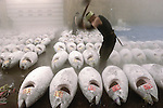 """An employee at the world's biggest fish Market in Tsukiji, Tokyo uses an axe to chop off the tails of large tuna to be auctioned at the market. More than 2,300 tons of fish -- about one-third of the total consumed in Japan -- passes through Tsukiji each day and offers more than 450 varieties of marine products. The market, which dates back almost 75, will move to a high-tech site on a man-made island in Toyosu, which is well-documented as being contaminated with benizine. Not that Tsukiji is much better off -- many buildings in the aging site are stuffed with asbestos. """"Choose your poison,"""" says one Tsukiji official. The new site, which the government plans to be readied by 2012, will be significantly larger, with more room for off-loading and for sellers to display their goods. The current location, says one official, is too cramped and collisions between motorised carts and pedestrians means accidents occur almost daily. Meanwhile, with fish sales down, it is becoming more difficult to justify Tsukiji's prime location and property developers are keeping a close watch on Tsukiji land, which is just a few blocks from the ritzy Ginza district of Tokyo, where per-meter land prices are the highest in the world...The move to the new Toyosu location, meanwhile, has been at the center of heated debate -- clean-up operations alone are estimated to cost ¬?67 billion (around US$660 million), with a further ¬?450 billion to build a new marketplace. Big wholesalers favour the move, but the 1,600-plus merchants mostly are against it. Yoshiharu Kiku, a Tsukiji storeowner who began working at the market 60 years ago, expresses bewilderment at the plans, saying that the name Tsukiji itself has become synonymous with the world's best and most eclectic selection of fish. """"This place has a long tradition. Why break it and start from scratch all over again?"""" he says."""