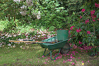 Gardeners wheelbarrow and tools, Over Alderley, Cheshire.