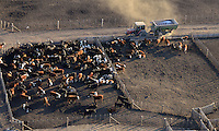 16/05/2012..Aerial view of feed lots and cattle near Rojas, Buenos Aires province, Argentina