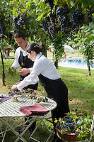 Staff of the two Michelin stars Ristorante Arquade near Verona preparing centrepieces with grapes in the vineyard for an al fresco meal