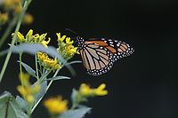Virginia nature scenes in late summer. Photo/Andrew Shurtleff Photography, LLC