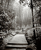 CHINA, Hangzhou, young woman standing on steps amid bamboo forest, Meijai Wu (B&W)