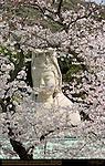 Ryozen Kannon framed with Sakura, Byakue Kannon White-robed Kannon, Kyoto, Japan