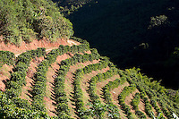 Domingos Martins_ES, Brasil...Lavoura de cafe ao lado de um trecho da Rota Imperial, antiga Estrada Dom Pedro de Alcantra...The coffee plantation  in the ancient Rota Imperial, know as Dom Pedro de Alcantara Road...Foto: LEO DRUMOND / NITRO