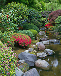 Washington Park Portland, OR<br /> Moon Bridge over flowing stream and flowering azaleas, The Japanese Garden