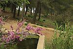 Israel, Upper Galilee, Ein Roim in Naftali Mountains forest