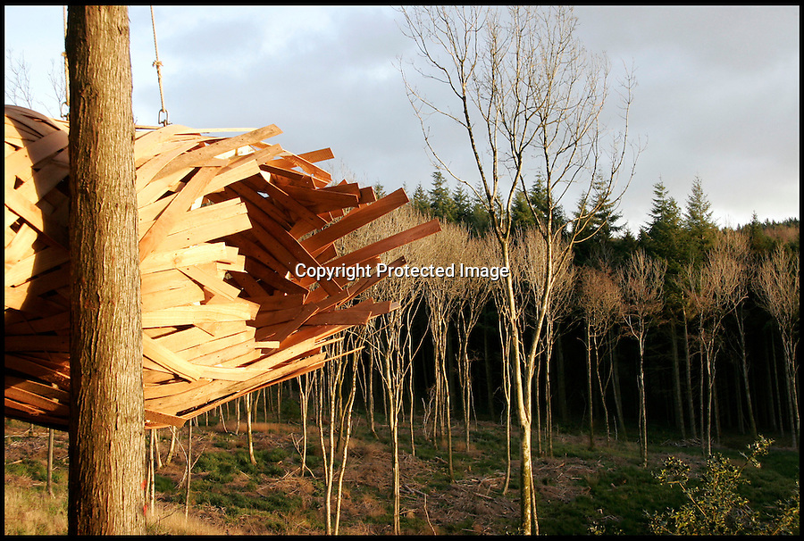BNPS.co.uk (01202) 558833<br /> Picture: collect<br /> <br /> The futuristic Cocoon treehouse that weaves between trees is an eco-friendly design made from a tree that was felled in the same forrest near by. The unique design is the brainchild of a group of students who set about making a cutting edge shelter from materials found in Hooke Park near Beaminster, Dorset. Budding designers Hugo Urrutia, Abdullah Omar Asghar Khan and Karjvit Rirermvanich spent five weeks planning, building and installing their creation, which hangs from hemp ropes. They created a 12-piece skeleton before wrapping it in strands of ply wood to create an amazing tunnel effect.