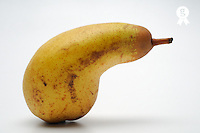 Pear on white background (Licence this image exclusively with Getty: http://www.gettyimages.com/detail/sb10068346o-001 )