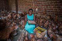 Uganda, Kasangati. Maria Kyisakye uses the BioLite stove at her home, it charges light as well as her mobile phone. She has three children, raises 45 chickens to sell their eggs and hope to grow her busienss.