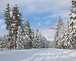Okanogan National Forest, WA<br /> Snowcovered road through a ponderosa pine (Pinus ponderosa) forest, after a winter storm, Methow Valley