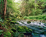 SWITZERLAND, Motiers, a stream runs through the forest in an area known as Cascade de Motiers, Jura Region