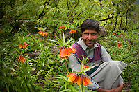 A young Bakarwal man relaxes amid a group of unusual hanging lilies, Himalayan Mountains, India
