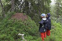 Kinder am Ameisenhaufen, Ameisenhügel, Größenvergleich, Rote Waldameise, riesiger Haufen eines Ameisenstaates in einem Nadelwald, der Haufen ist mit Blaubeer-Büschen bewachsen, Formica (rufa), wood ant