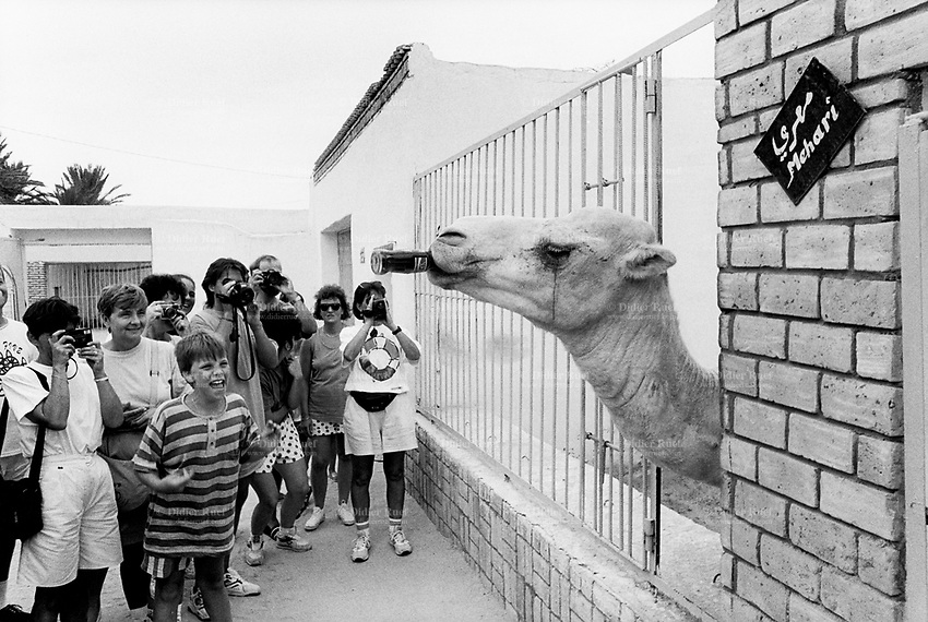Tunisia. Tozeur Governorate. Tozeur. European tourists visit the public zoo. film and take pictures of Ali Baba, the Mehari camel drinking its daily Coca Cola bottle. Tozeur is an oasis and a city in south west Tunisia, but also the capital of the Tozeur Governorate. 20.09.1994 © 1994 Didier Ruef