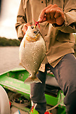 BRAZIL, Agua Boa, fisherman holding a Piranah, Agua Boa River and resort