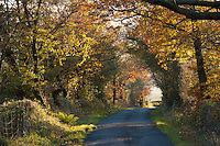 Autumn road at Cowark, Lancashire.