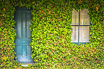 House front couvered in vines. Murrurundi, New England, NSW, Australia