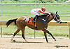 Gravitate winning at Delaware Park on 7/6/13