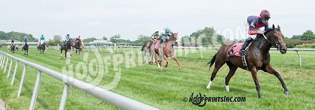 Classical Destiny with Kristina McManigell falling at Delaware Park on 8/19/13 causing the race to be declared a non-race