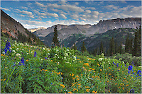 Yankee Boy Basin near Ouray, Colorado, is famous for its summer wildflowers. I was fortunate enough to spend some time there in July with a good friend. We trekked up the 4WD road and enjoyed an evening just above tree line, soaking up the fresh mountain air and smelling the abundant wildflowers. This Colorado Wildflower image was captured near the end of the 4WD road and looks back at the basin we navigated on the way up.