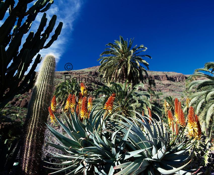Spanien, Kanarische Inseln, Gran Canaria, im Palmitos Park, bluehende Aloe | Spain, Canary Island, Gran Canaria, at Palmitos Park, aloe, blooming