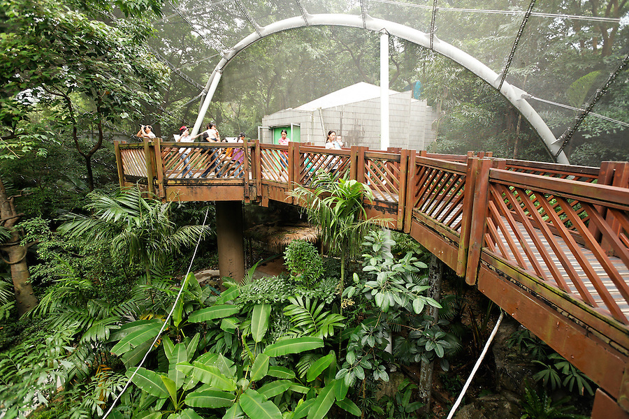 Elevated walkway above tree canopy at Edward Youde Aviary, Hong Kong Park, Hong Kong SAR, People's Republic of China, Asia
