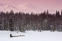 Bryan Mills sled dog team on trail near Finger Lake Chkpt 2006 Iditarod Finger Lake Alaska Winter