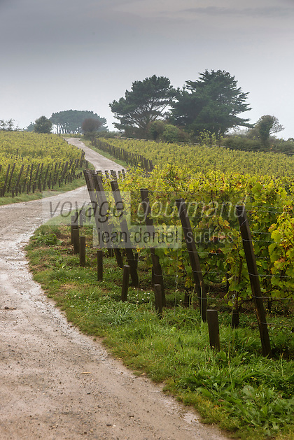 Royaume-Uni, îles Anglo-Normandes, île de Sark (Sercq):  Le vignoble des frères  Barclay  // United Kingdom, Channel Islands, Sark Island (Sercq): vineyard Barclay brothers