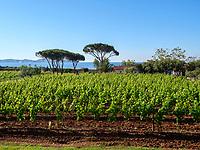 Weingut la Chiusa, Magazzini, Elba, Region Toskana, Provinz Livorno, Italien, Europa<br /> vineyard estate la Chiusa, Magazzini, Elba, Region Tuscany, Province Livorno, Italy, Europe