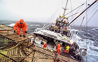 "Crewman Joe Hinton works on the stack on the fishing vessel ""Reliance""  during a storm in the Bering Sea which took down four boats in four days during opilio crab fishing in February 1994.  Only one crewman lost his life which was considered very fortunate. The Bering Sea is known for having the worst storms in the world.  Crab fishing in the Bering Sea is considered to be one of the most dangerous jobs in the world.  This fishery is managed by the Alaska Department of Fish and Game and is a sustainable fishery.  The Discovery Channel produced a TV series called ""The Deadliest Catch"" which popularized this fishery.  Today the fishery has been consolidated resulting in a lot less boats participating in this fishery based out of Dutch Harbor, Alaska."