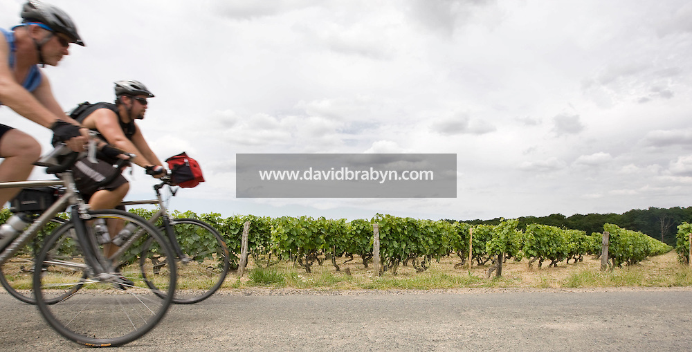 Writer David Darlington (L), participant in a Backroads cycle tour of the Loire Valley, and Greg Corinth from Backroads ride together through wineyards near Amboise, France, 26 June 2008.