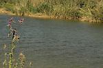Israel, Northern Negev, Shallaleh pool in the Besor region