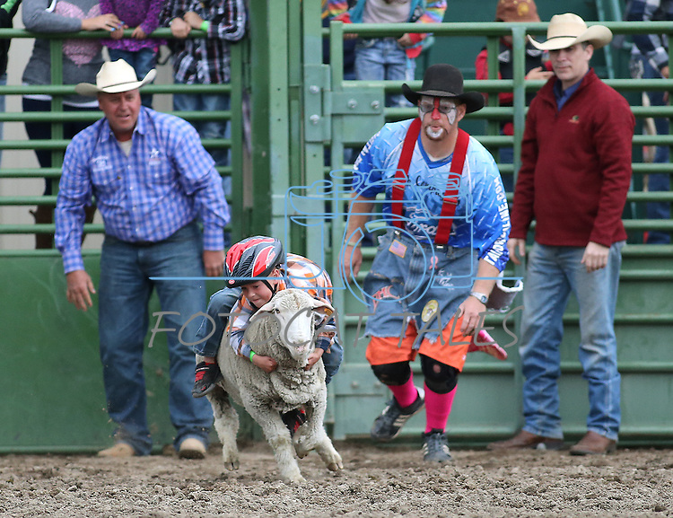 Hayden Meznarich, 5, competes in the mutton busting event at the Smackdown at Fuji Park in Carson City, Nev., on Friday, June 5, 2015. <br /> Photo by Cathleen Allison/Nevada Photo Source
