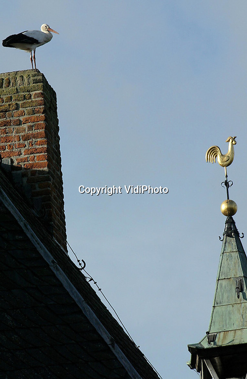 Foto: VidiPhoto..RANDWIJK - Op de schoorsteen van de hervormde kerk in Randwijk logeert op dit moment een ooievaar. Het dier, dat zijn nest in de buurt van het dorp heeft, is niet van plan om te vertrekken naar het warme zuiden. Volgens vogelvereniging SOVON blijven steeds meer ooievaars tijdens de winter in Nederland omdat ze instinctief het risico van de lange trek groter vinden dan het gebrek aan voedsel en de kou gedurende de winter. Vaak zijn de 'blijvers', nazaten van ooievaars uit de kweekstations. Nederland telt nu zo'n 420 broedparen. Dat aantal is het afgelopen jaar stabiel gebleven.