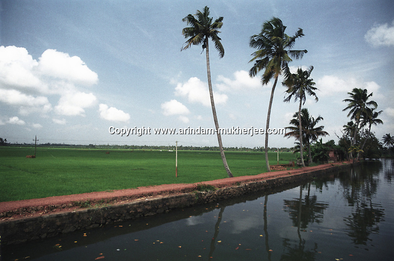 A paddy field at Alleppey, Kerala, India.