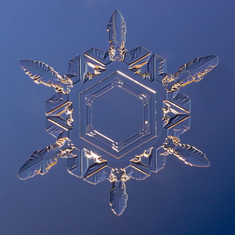 Snowflake Dorodus - Stellar Plate Snowflake