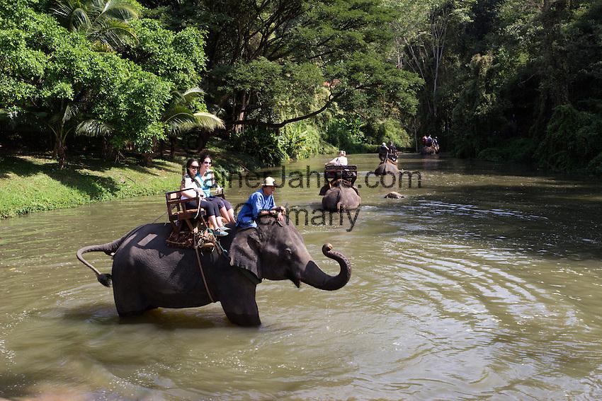 Thailand, Northern Thailand, near Chiang Mai: Tourists on elephant ride at the Thai Elephant Conservation Centre | Thailand, Nordthailand, bei Chiang Mai: im Thai Elephant Conservation Centre koennen Touristen auf Elefanten reiten