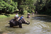 Thailand, Northern Thailand, near Chiang Mai: Tourists on elephant ride at the Thai Elephant Conservation Centre | Thailand, Nordthailand, bei Chiang Mai: im Thai Elephant Conservation Centre koennen Touristen auf Elefanten reiten
