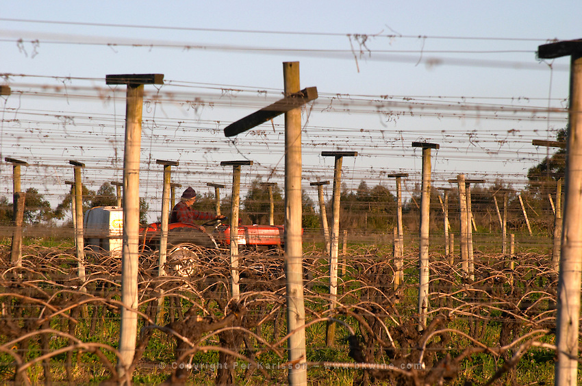 A vineyard worker on a tractor treating the vines. Vines trained in Guyot Simple style. Bodega Carlos Pizzorno Winery, Canelon Chico, Canelones, Uruguay, South America